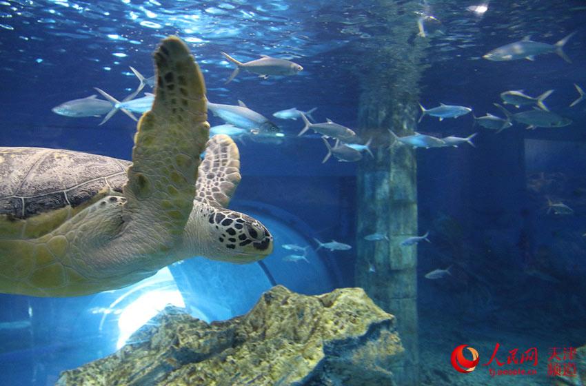 壁纸 海底 海底世界 海洋馆 水族馆 850_560