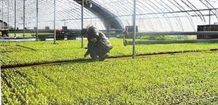 天津市静海区发展特色种植业助力农民增收致富