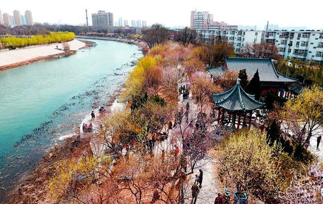 航拍:春回天津桃花堤