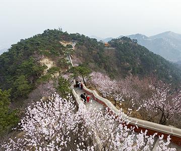 天津:云海伴山花