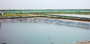 天津市水产养殖面积今年达60万亩