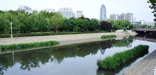天津南开区河道绿化提升改造 闻到花香听到琴声