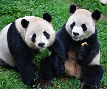 云南昆明:动物享美食迎中秋