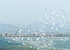 """""""百鸟飞跃玻璃桥"""""""